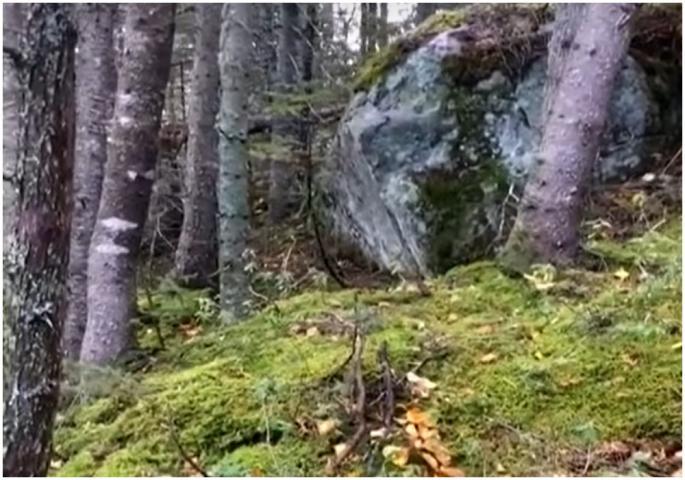 ВОЗНЕМИРУВАЧКО ВИДЕО: Снимка од ловечка камера, земјата како да ја проголтуваа шумата (ВИДЕО)